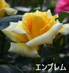 b0197433_1413848.jpg