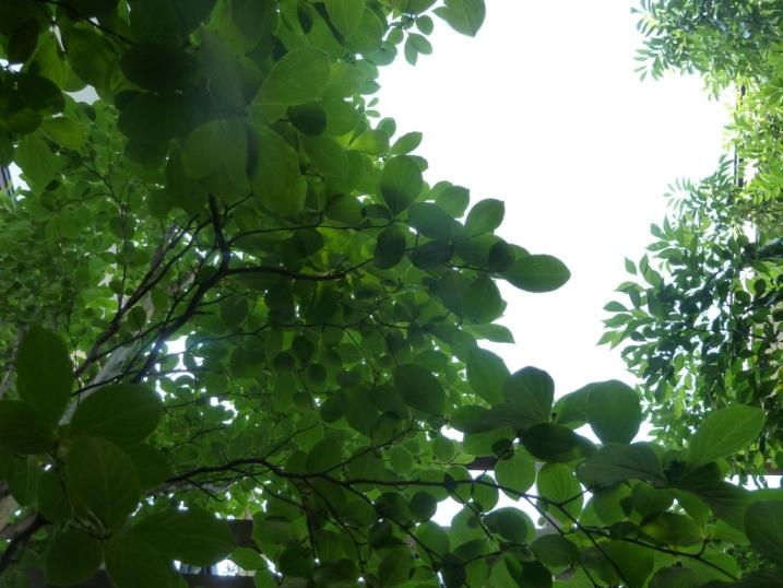 棟梁の庭から・・・風薫る五月☆_c0152341_14325146.jpg