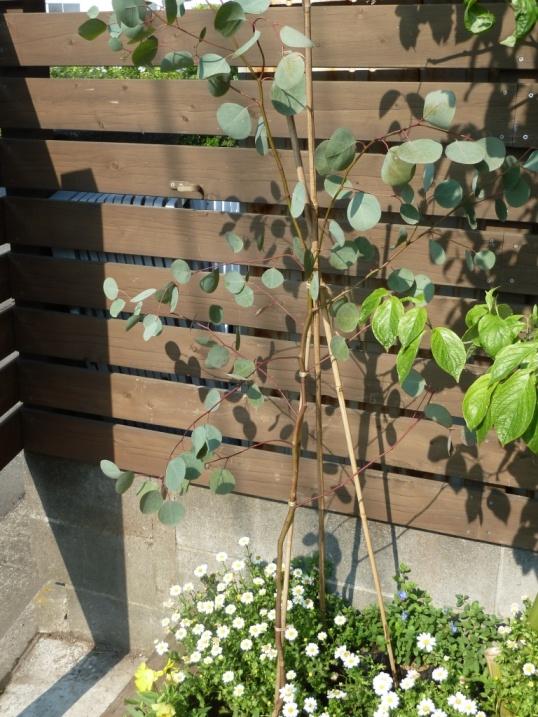 棟梁の庭から・・・風薫る五月☆_c0152341_1441598.jpg