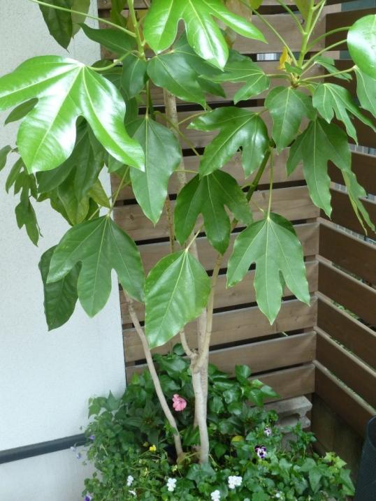 棟梁の庭から・・・風薫る五月☆_c0152341_14451436.jpg