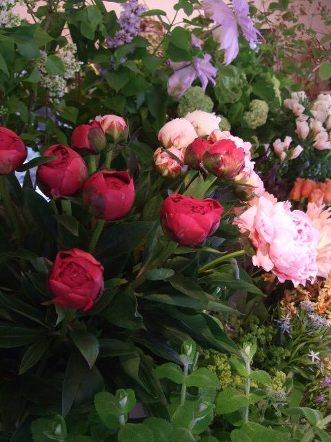 オークリーフ(5月の花はいいですね・・)_f0049672_18422097.jpg