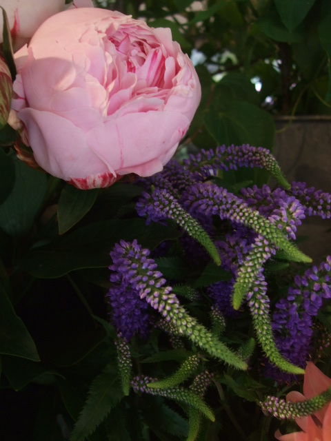 オークリーフ(5月の花はいいですね・・)_f0049672_18553873.jpg