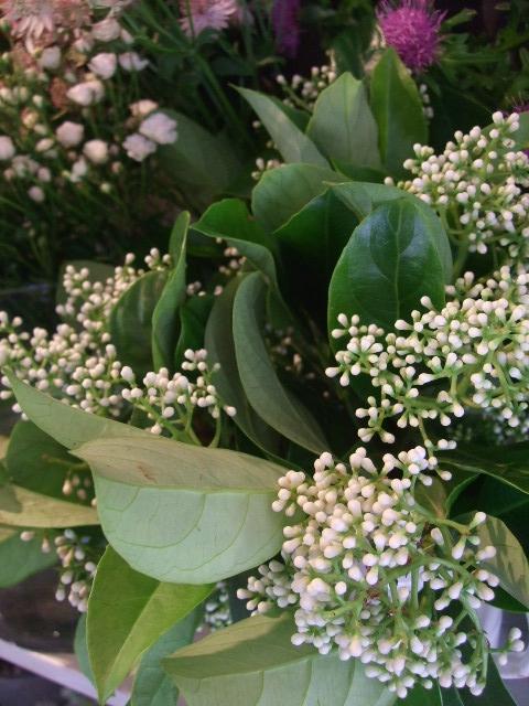 オークリーフ(5月の花はいいですね・・)_f0049672_18554780.jpg