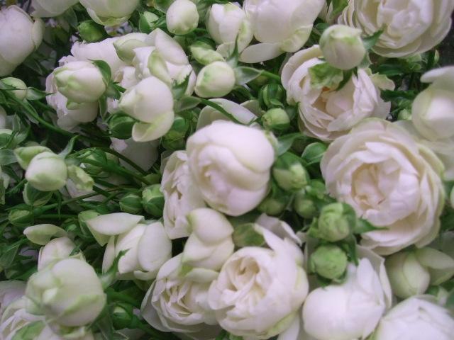 オークリーフ(5月の花はいいですね・・)_f0049672_18555587.jpg
