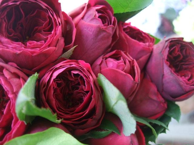 オークリーフ(5月の花はいいですね・・)_f0049672_1856185.jpg