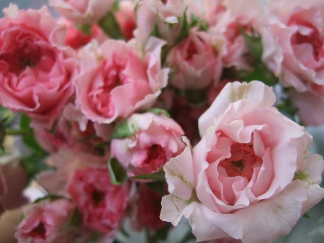 オークリーフ(5月の花はいいですね・・)_f0049672_18562363.jpg