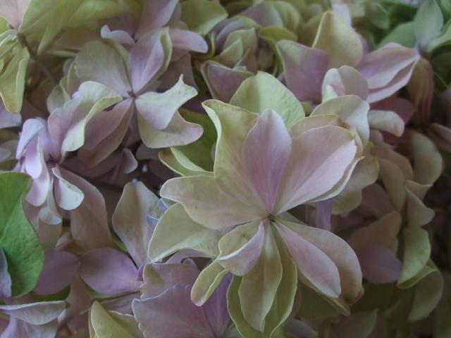オークリーフ(5月の花はいいですね・・)_f0049672_18563978.jpg
