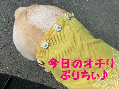 ラブちんとお揃~_e0222588_1837514.jpg