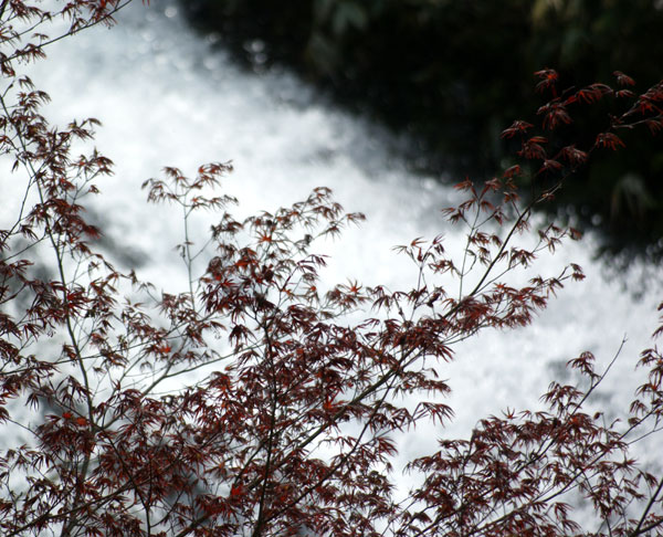 久しぶりの七滝で、キセキレイと彩雲を目撃(^^)v_a0136293_17385040.jpg