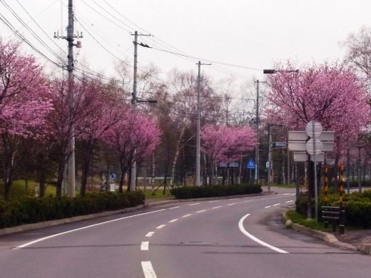 2011年5月21日(土):とても花見どころではない!?_e0062415_1843088.jpg