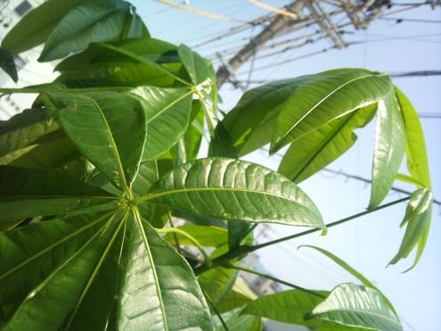 観葉植物_e0149215_16145814.jpg