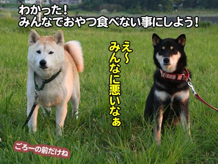 c0166018_1113262.jpg