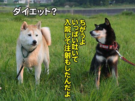 c0166018_111362.jpg