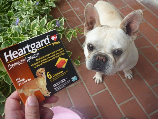 犬用薬品 フロントラインとハートガードプラス(カルドメック)_b0054727_2305615.jpg