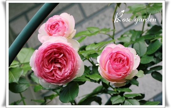 d0043737_235617.jpg