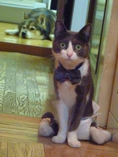 猫のお友だち 珊瑚ちゃん祿太くん編。_a0143140_22314583.jpg