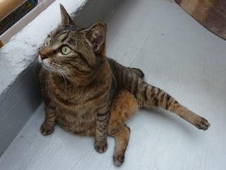 猫のお友だち 珊瑚ちゃん祿太くん編。_a0143140_22331574.jpg