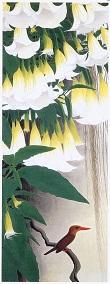 ダチュラと田中一村_c0217853_19372068.jpg
