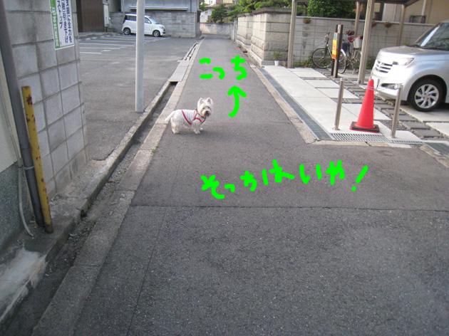 d0134156_16345127.jpg