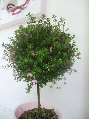 花の名_d0230676_1814158.jpg
