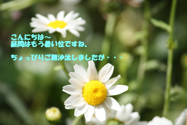 e0096888_17103855.jpg