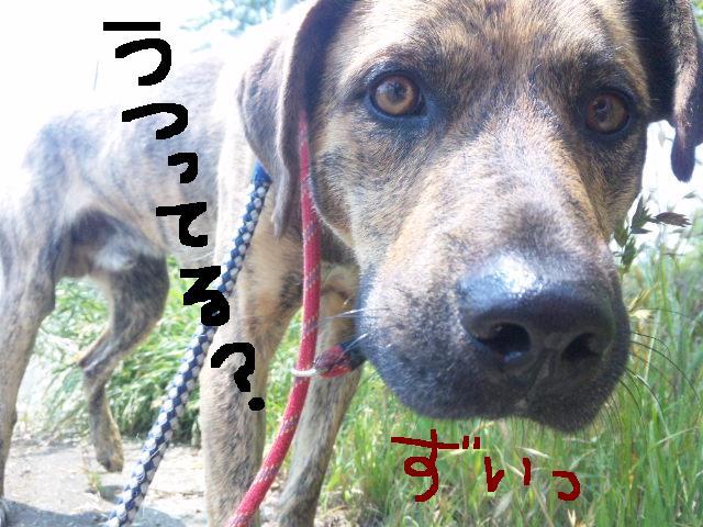 ★UKC JAPAN ボランティア便り★_d0187891_3594660.jpg