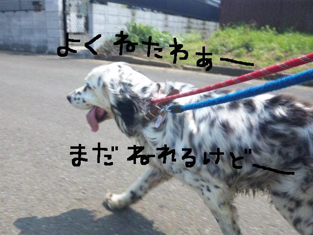 ★UKC JAPAN ボランティア便り★_d0187891_3595578.jpg