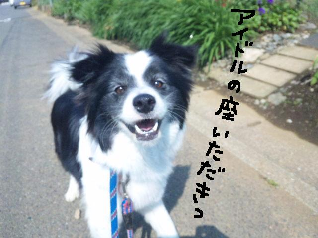 ★UKC JAPAN ボランティア便り★_d0187891_401458.jpg