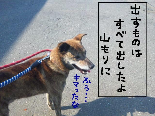 ★UKC JAPAN ボランティア便り★_d0187891_40214.jpg