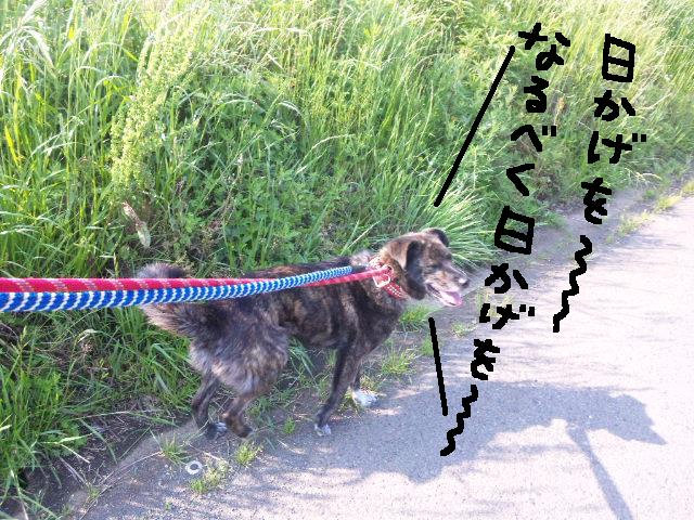 ★UKC JAPAN ボランティア便り★_d0187891_402866.jpg