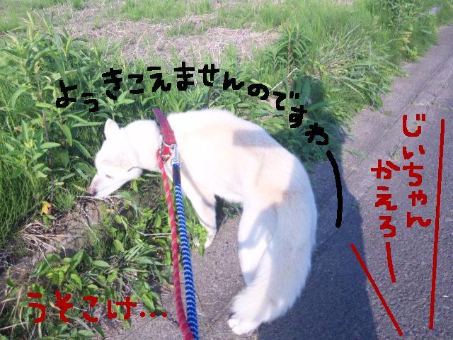 ★UKC JAPAN ボランティア便り★_d0187891_403649.jpg