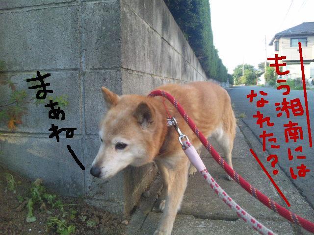 ★UKC JAPAN ボランティア便り★_d0187891_41138.jpg