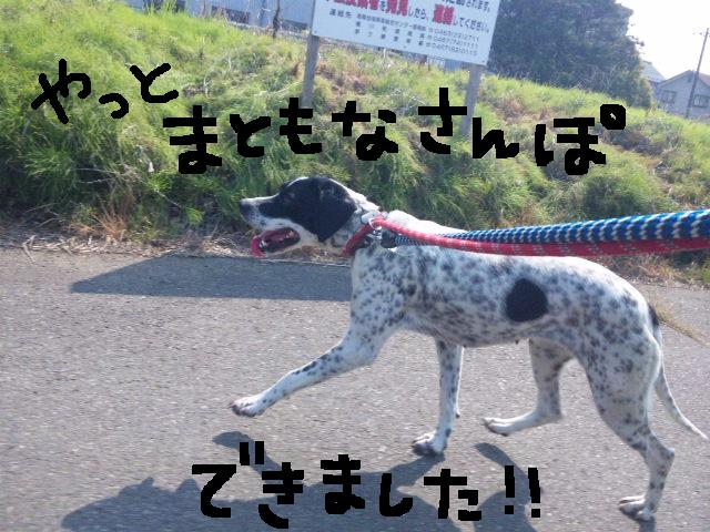 ★UKC JAPAN ボランティア便り★_d0187891_41191.jpg