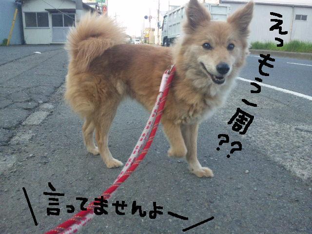 ★UKC JAPAN ボランティア便り★_d0187891_41259.jpg