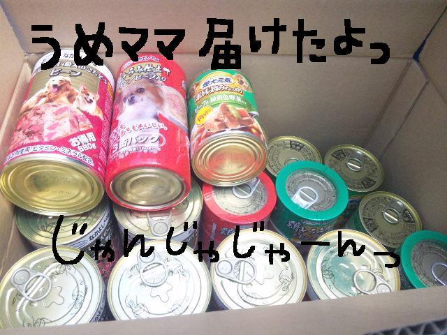 ★UKC JAPAN ボランティア便り★_d0187891_413399.jpg