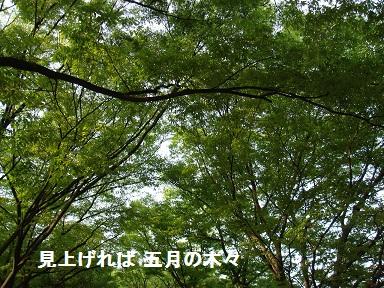 b0226221_9581474.jpg