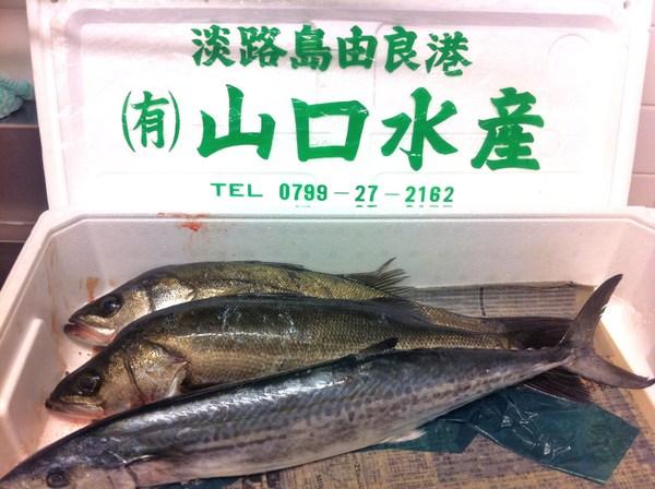 淡路島直送の魚 ⑨_e0210422_1442320.jpg