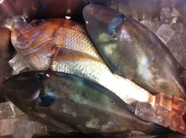 淡路島直送の魚 ⑨_e0210422_14441483.jpg