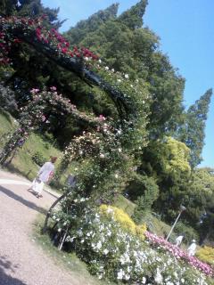 薔薇の妖精☆靫公園_a0088827_2112534.jpg
