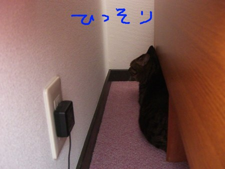 a0099131_1257419.jpg