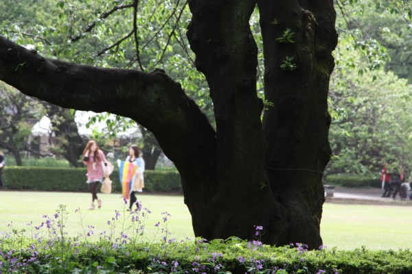 桜は散っても景色を造る_f0055131_80083.jpg