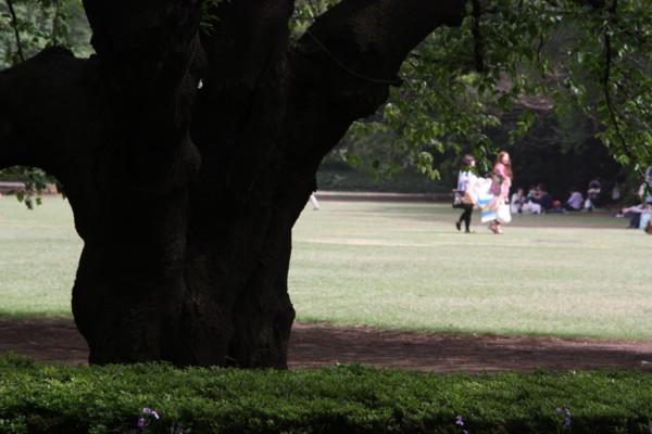 桜は散っても景色を造る_f0055131_802350.jpg
