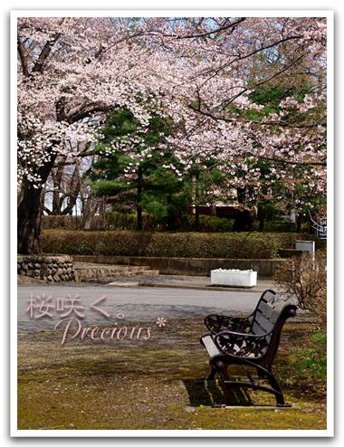 「Precious*恋するカメラ」のMACHI*さん登場!_c0039735_1292519.jpg