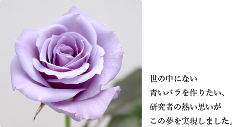 b0071543_1742457.jpg
