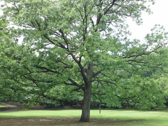 大きな木の下で☆チャリティーパークヨガのご報告_e0130657_23313447.jpg