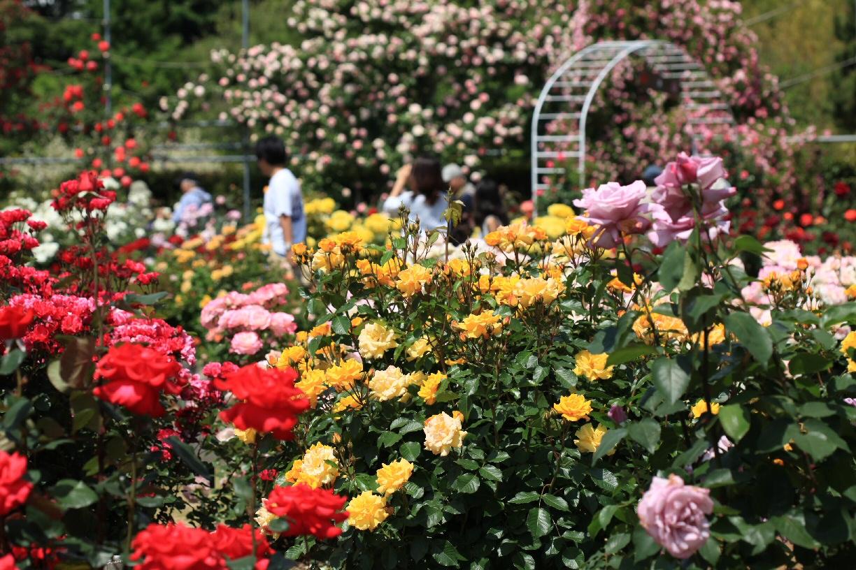 薔薇の季節♪_f0158364_14211797.jpg