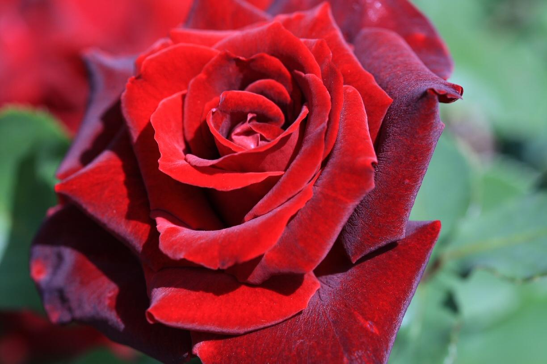 薔薇の季節♪_f0158364_1424622.jpg