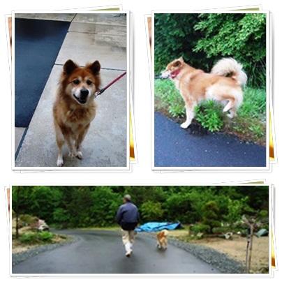 朝の散歩_a0199979_15433464.jpg