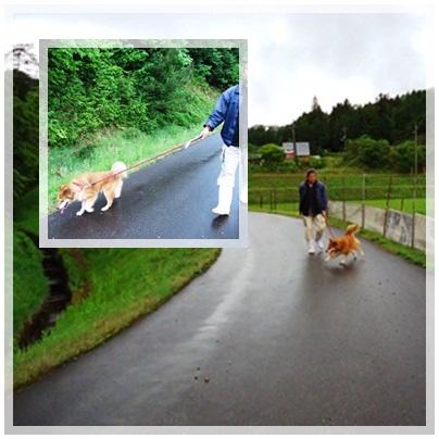 朝の散歩_a0199979_154756.jpg