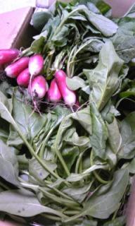 無農薬有機栽培野菜、てんこ盛り!_e0202182_15203952.jpg